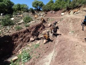 Soil erosion: Andalusia, Spain