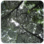 canopy_150sq