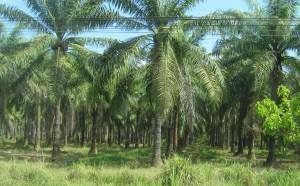 monoculture