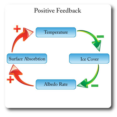 IB environmental systems positive feedback
