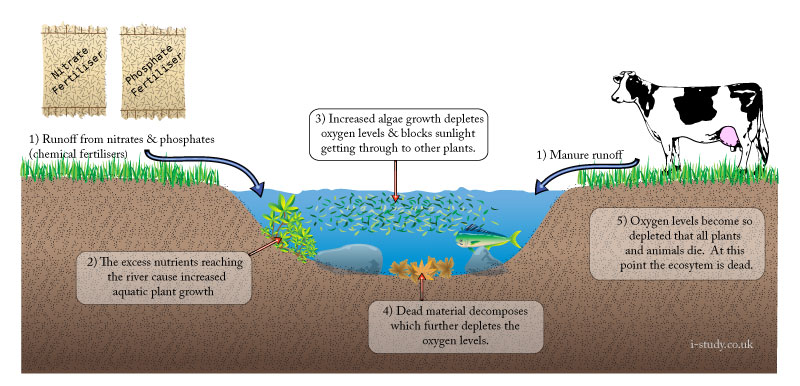 IB Environmental systems eutrophication