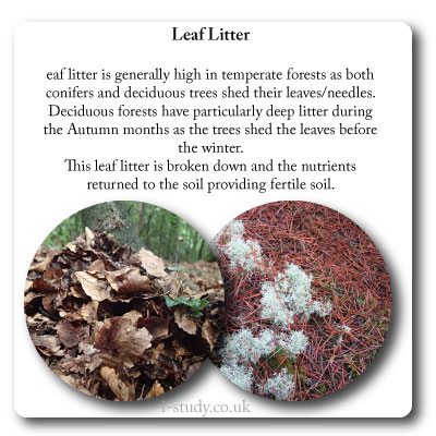 temperate forest leaf litter