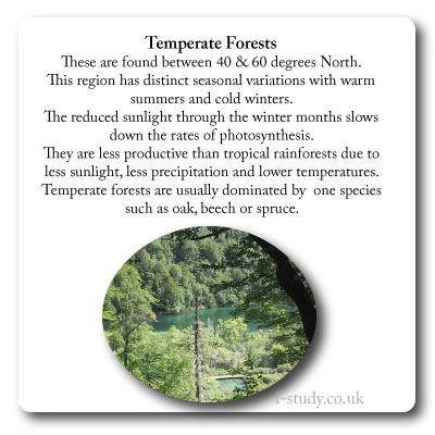 Biomes, temperate forest